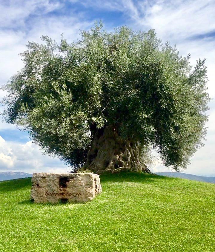 Acque Albule SpA Terme di Roma 44