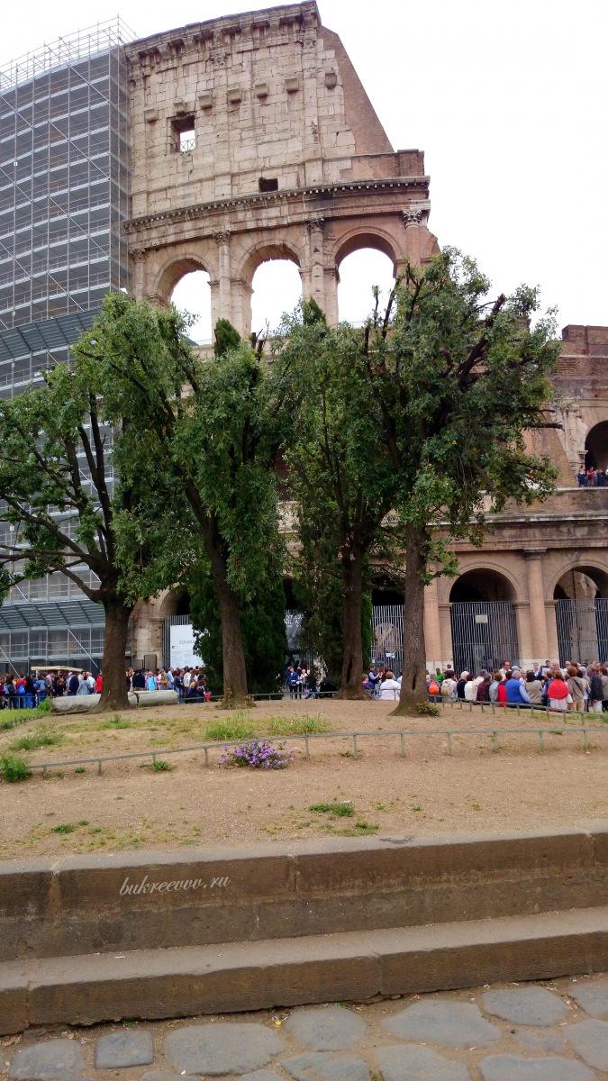 Colosseo 83