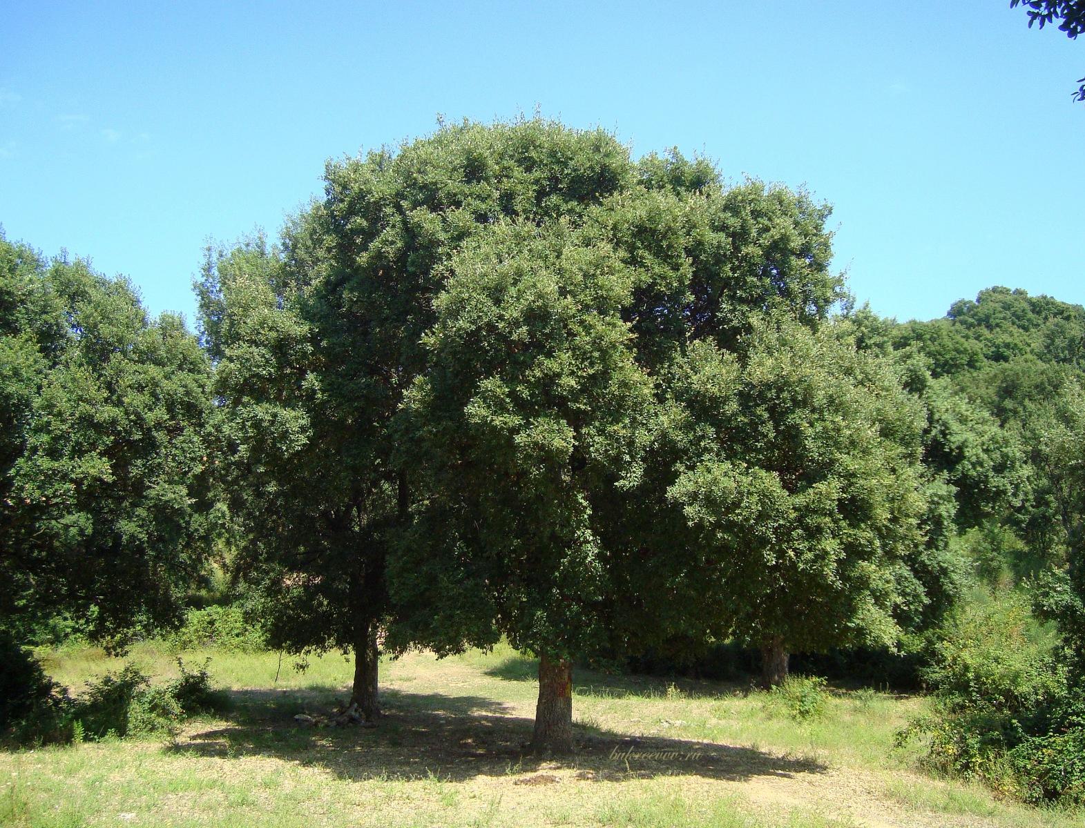 Monte Catillo 27